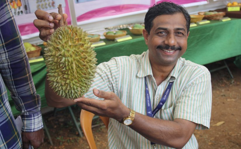 AT THE 14TH KONKAN FRUIT FESTIVAL… Durian going for `500!