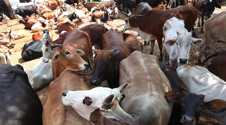 GOANS DEPRIVED OF BEEF