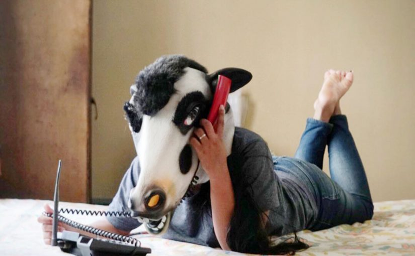 COW MASKS FOR SAFETY