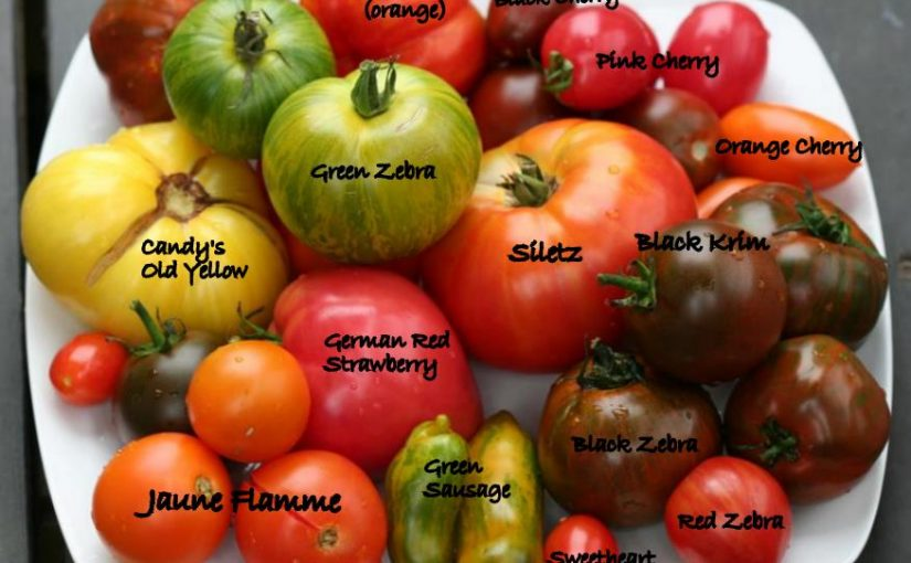 THE COST OF A MEDIUM-SIZE TOMATO? FIVE RUPEES!