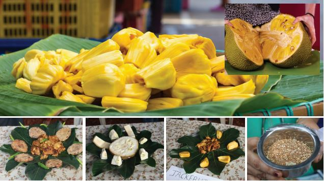 CELEBRATING THE JACKFRUIT