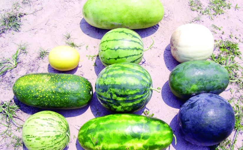 THE HEAT IS ON AND WATERMELONS ARE HERE!
