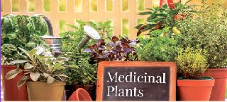 28th Annual Festival of Plants & Flowers