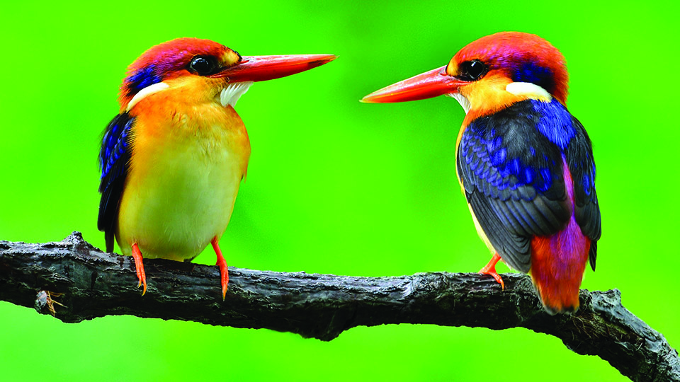 Bird Festival of Goa