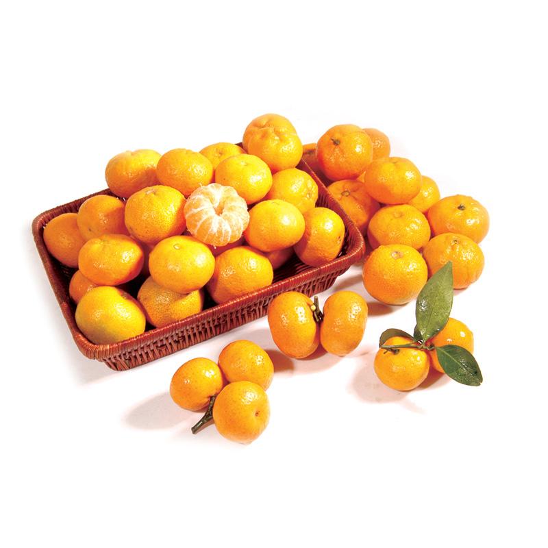 Baby Mandarin oranges at Magsons!