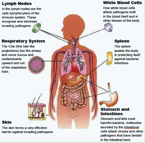 What are the parts of the immune system?