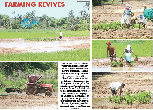 FARMING REVIVES IN TALEIGAO!