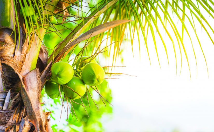 WORLD CELEBRATES 'COCONUT DAY' ON FEBRUARY 2!