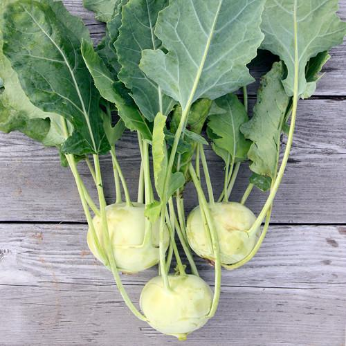 FALLING FOR KOHLRABI!